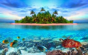 Остров в тропиках