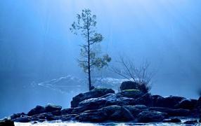 Дерево на каменном острове