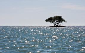 Маленький остров с деревом