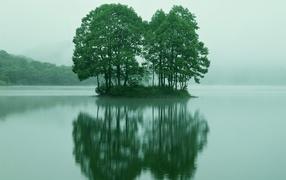 Деревья на маленьком острове