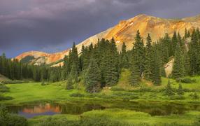 Еловый лес в долине