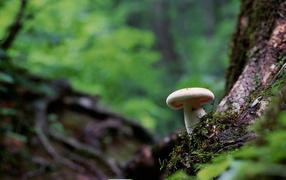 Белый гриб в лесу под деревом