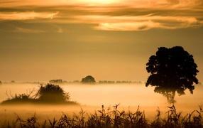Morning fog above the swamp