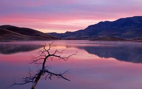 Природа в розовых тонах