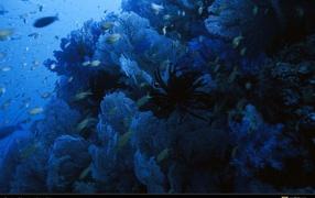 Голубое подводное царство