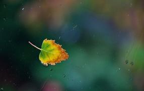 Осенний лист прилип к стеклу