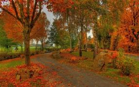 Дорога по осеннему лесу