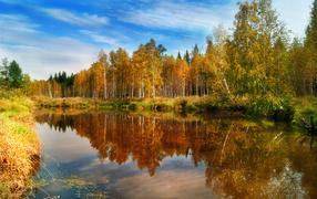 Желтая Осень на лесном озере