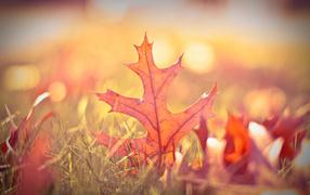 Осенний лист в траве
