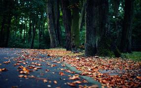 Осенние листья на асфальте