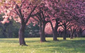 Красивый цветущий весенний лес