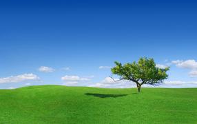 Красивая весенняя поляна с травой
