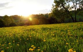 Весенняя поляна в лесу