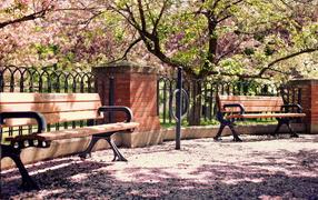 Скамейки под вишнями