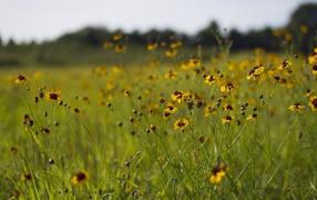 Summer flower glade