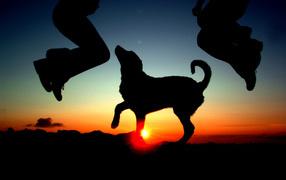 Танец на закате с собакой