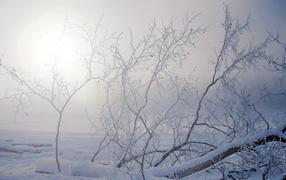 Упавшее дерево под снегом