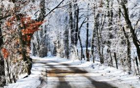 Дорога в зимнем парке