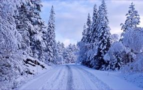 Заснеженная дорога среди деревьев
