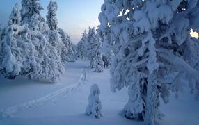 Покрытые снегом деревья