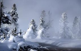 Снег засыпал деревья