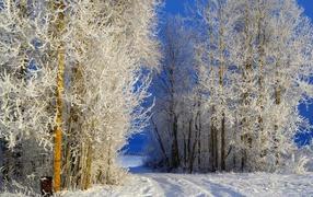 Деревья покрылись инеем