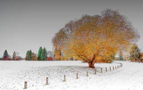 Неожиданный снег после осени