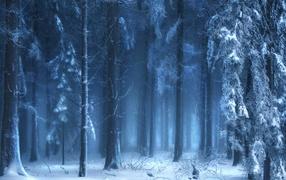 Зимний лес в тумане