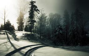 След на снегу