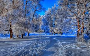 Тропа в зимнем лесу