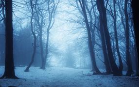 Зимний лес втумане