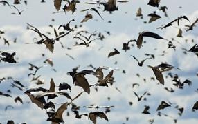 Стая летучих мышей