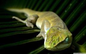 Зеленая ящерка спит возьми большом листе
