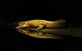 Фонарь освещает крокодила