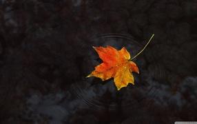 Гифки осень GIF осенняя природа