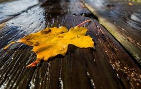 ᐈ Листья на воде картинки и фото листья на воде скачать