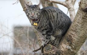 Испуганный дымчатый котяра сидит нате дереве