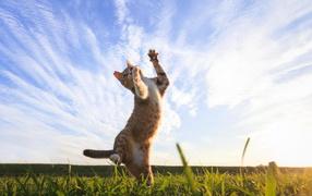 Рыжий котяра играет бери зеленой траве около красивым небом