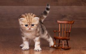 Маленький котенок рядышком от игрушечным деревянным креслом