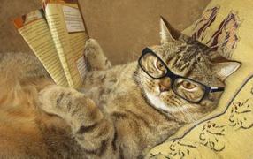 Забавный свинцовый котишка во очках да  со газетой лежит бери подушке