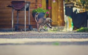Маленький мышастый котенок прыгает для асфальте
