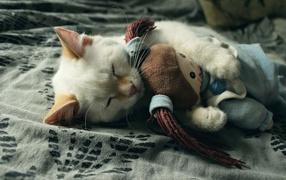 Маленький котенок спит  со мягкой игрушкой