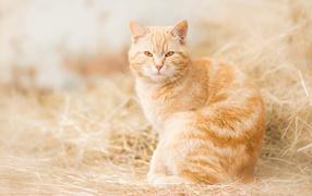 Серьезный мнение красивого рыжего кота