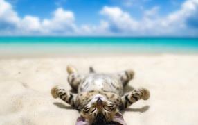 Полосатый котенок загорает бери морском пляже