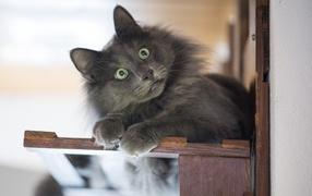 Удивленный воззрение зеленоглазого серого кота