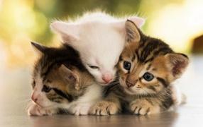 Три маленьких котенка греют дружок друга