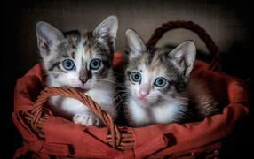 Два милых серых котенка сидят во корзине