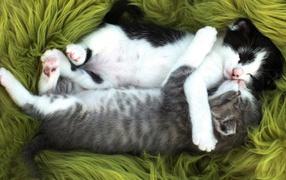 Два маленьких забавных котенка спят обнявшись