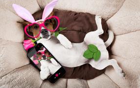 Собака породы джек-рассел-терьер во смешных очках делает селфи