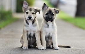 Два маленьких милых щенка сидят на дороге